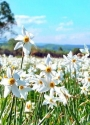 "Blitz tour in the Carpathians ""Shippin waterfall + daffodil valley"""