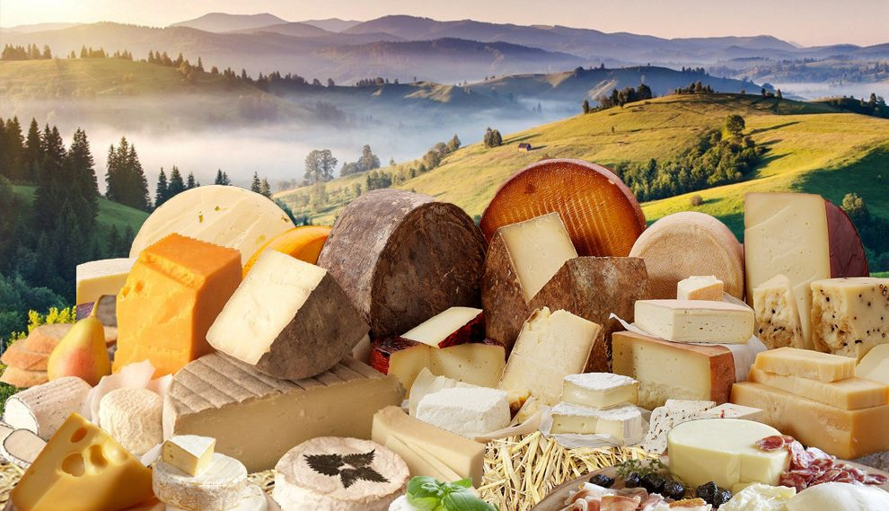 Authentic Ukrainian cheese: 12 Cheese-making Dairies in Transcarpathia